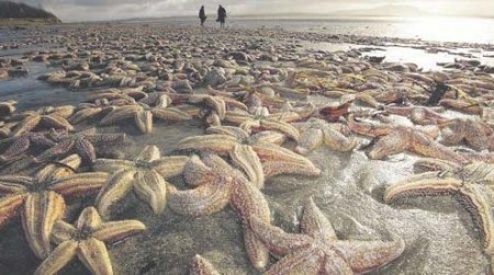 starfish-die-off-450x251